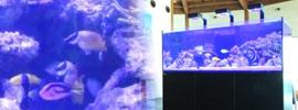 海水魚水槽150cm