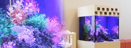 海水魚水槽45cm