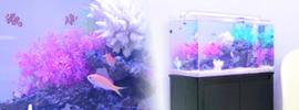 海水魚水槽60cm