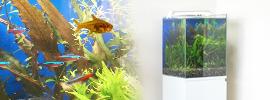 淡水魚水槽30cm
