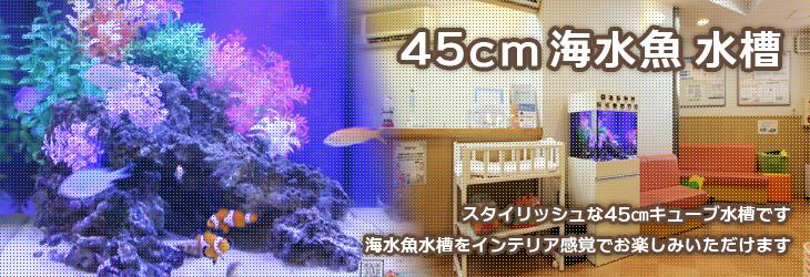 45cm海水魚水槽のレンタル・リースサービス