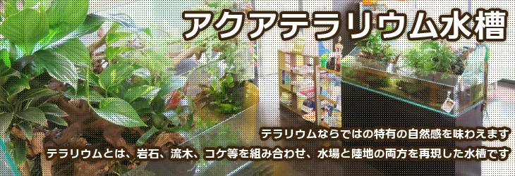 アクアテラリウムもレンタルできます!水槽レンタルサービスの福岡アクアガーデン