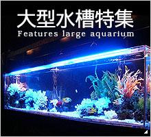 福岡アクアガーデンの大型水槽特集