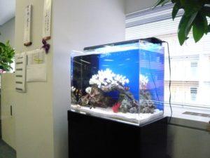 デスク横からお魚達も声援を送っています。