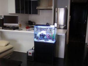 家族の中心には必ずお魚達がいます
