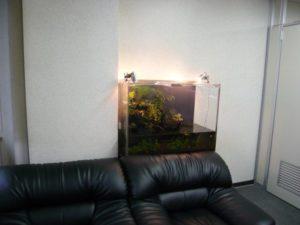 社内に森林と水のある癒し空間を創ってみませんか。