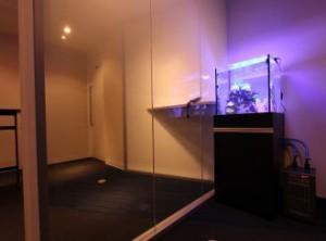 落ち着いた室内にぴったりの淡い水槽