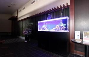 温泉施設にシマキンチャクフグの水槽を短期レンタル