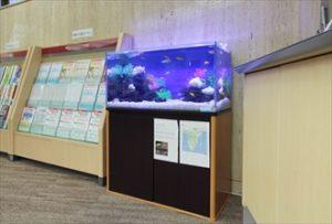 証券会社の待合室にシクリッド水槽を設置しました