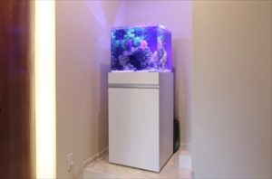 法務事務所に幻想的なキューブ水槽を設置しました