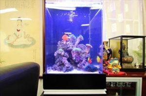 オフィスに設置した高級感のあるインテリア水槽!