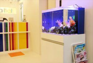 色鮮やかな熱帯魚水槽がお客様をお出迎えします