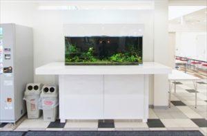 住宅展示場にインパクトのある水槽が登場!