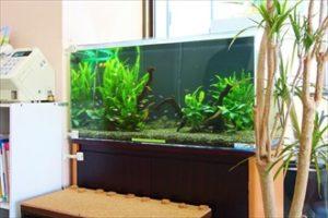 水草の緑鮮やかな淡水魚水槽が患者様を癒します