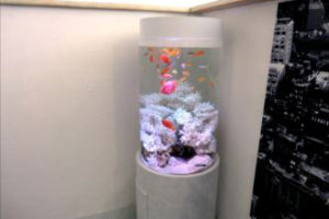 サロン様 白に映えるポップカラーな魚たちの水槽