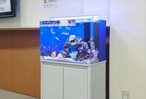 札幌市 病院受付に60cmの海水水槽