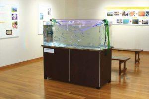 青森県 観光交流センターに150cm淡水魚水槽