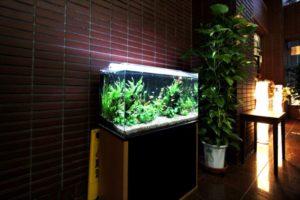 設置場所に合わせたシックな淡水魚水槽!