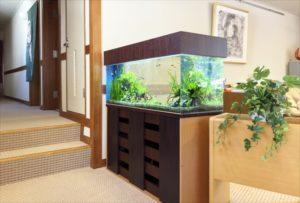 老人ホームに癒しと清涼感を!淡水魚水槽