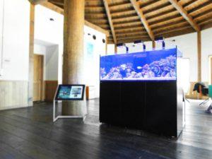 苫小牧市 施設に150cmの海水魚水槽